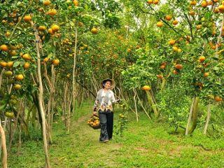 4 điểm du lịch không thể bỏ qua khi đến Tiền Giang