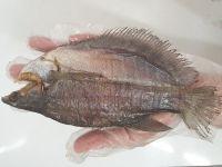 Khô cá sặc giá bao nhiêu tiền 1kg? Mua ở đâu uy tín tại TPHCM