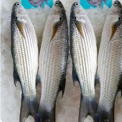Cá đói biển